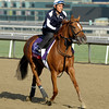 Caption: Zagora<br /> Breeders' Cup morning works at Santa Anita near Arcadia, California, on Oct. 31, 2012.<br /> BCRACES2012 WorksWed2 image778<br /> Photo by Anne M. Eberhardt