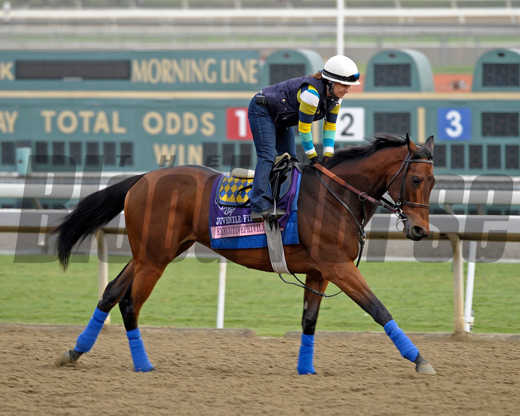 Caption: Executiveprivelege<br /> Breeders' Cup morning works at Santa Anita near Arcadia, California, on Oct. 31, 2012.<br /> BCRACES2012 WorksThurs2 image215<br /> Photo by Anne M. Eberhardt