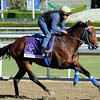 Caption: Suggestive Boy<br /> Breeders' Cup morning works at Santa Anita near Arcadia, California, on Oct. 29, 2012.<br /> BCRACES2012 WorksMonday1 image598<br /> Photo by Anne M. Eberhardt
