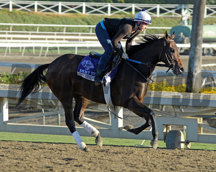 Caption: Second City<br /> Breeders' Cup morning works at Santa Anita near Arcadia, California, on Oct. 30, 2012.<br /> BCRACES2012 WorksTues2 image273<br /> Photo by Anne M. Eberhardt