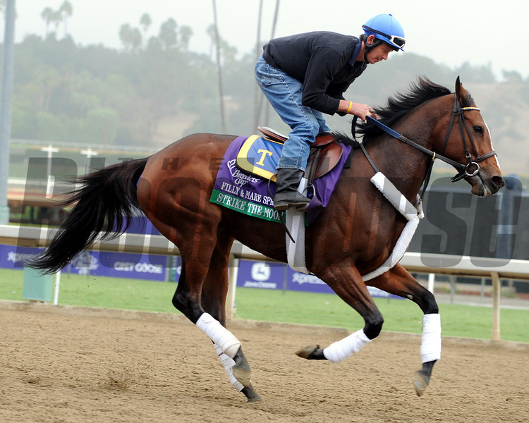 Strike the Moon<br /> Breeders' Cup<br /> Photo by Dave Harmon