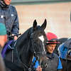 Caption: The Fugue<br /> Breeders' Cup morning works at Santa Anita near Arcadia, California, on Oct. 31, 2012.<br /> BCRACES2012 WorksWed2 image438<br /> Photo by Anne M. Eberhardt