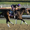 Caption: Summer of Fun<br /> Breeders' Cup morning works at Santa Anita near Arcadia, California, on Oct. 29, 2012.<br /> BCRACES2012 WorksMonday1 image410<br /> Photo by Anne M. Eberhardt