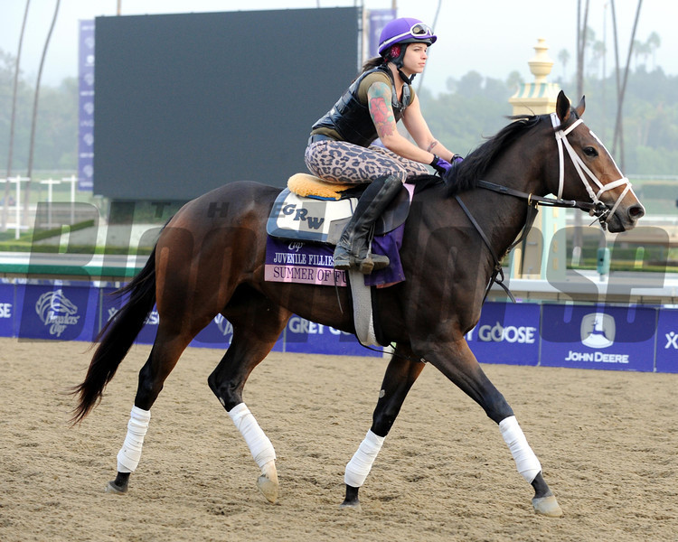 Summer of Fun<br /> Breeders' Cup<br /> Photo by Dave Harmon