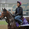 Caption: Excelebration<br /> Breeders' Cup morning works at Santa Anita near Arcadia, California, on Oct. 31, 2012.<br /> BCRACES2012 WorksThurs2 image942<br /> Photo by Anne M. Eberhardt