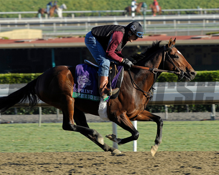 Caption: Boxeur des Rues, Sprint<br /> Breeders' Cup morning works at Santa Anita near Arcadia, California, on Oct. 29, 2012.<br /> BCRACES2012 WorksMonday1 image482<br /> Photo by Anne M. Eberhardt