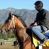 Caption: Alpha<br /> Breeders' Cup morning works at Santa Anita near Arcadia, California, on Oct. 30, 2012.<br /> BCRACES2012 WorksTues2 image217<br /> Photo by Anne M. Eberhardt