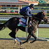 Caption: Merit Man, Juvenile Sprint<br /> Breeders' Cup morning works at Santa Anita near Arcadia, California, on Oct. 28, 2012.<br /> BCRACES2012 WorksSunday2 image769<br /> Photo by Anne M. Eberhardt