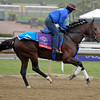 Caption: Trailblazer<br /> Breeders' Cup morning works at Santa Anita near Arcadia, California, on Oct. 31, 2012.<br /> BCRACES2012 WorksThurs2 image140<br /> Photo by Anne M. Eberhardt