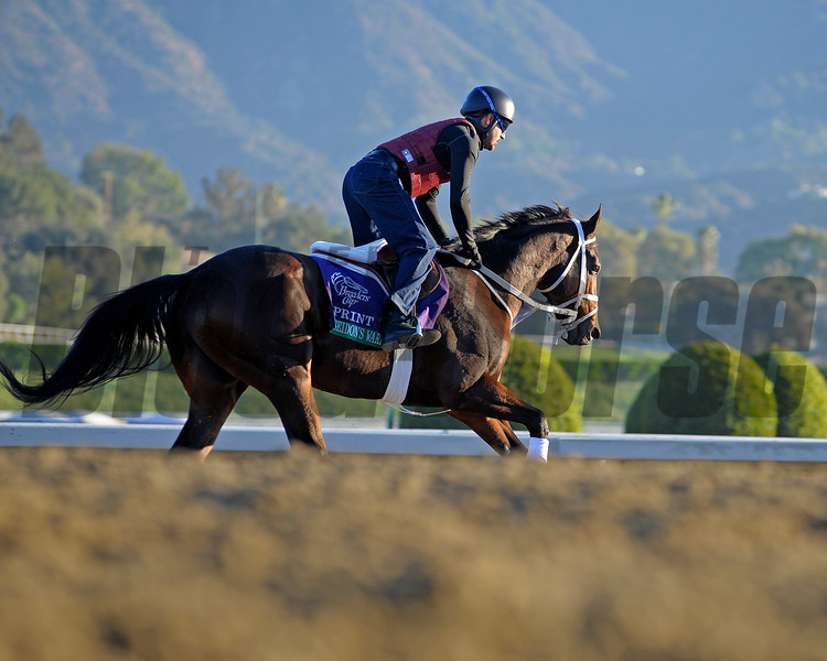 Caption: Poseidon's Warrior<br /> Breeders' Cup morning works at Santa Anita near Arcadia, California, on Oct. 30, 2012.<br /> BCRACES2012 WorksTues2 image73<br /> Photo by Anne M. Eberhardt