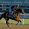 Caption: Contested, Filly and Mare Sprint<br /> Breeders' Cup morning works at Santa Anita near Arcadia, California, on Oct. 28, 2012.<br /> BCRACES2012 WorksSunday2 image593<br /> Photo by Anne M. Eberhardt