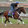 Caption: Strike the Moon<br /> Breeders' Cup morning works at Santa Anita near Arcadia, California, on Oct. 31, 2012.<br /> BCRACES2012 WorksThurs2 image145<br /> Photo by Anne M. Eberhardt
