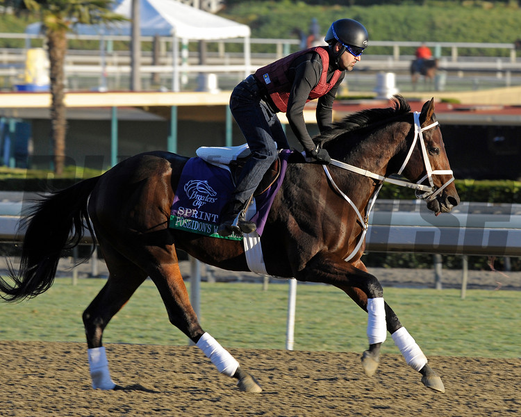 Caption: Poseidon's Warrior, Sprint<br /> Breeders' Cup morning works at Santa Anita near Arcadia, California, on Oct. 29, 2012.<br /> BCRACES2012 WorksMonday1 image270<br /> Photo by Anne M. Eberhardt