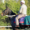 Caption: Shareta<br /> Breeders' Cup morning works at Santa Anita near Arcadia, California, on Oct. 30, 2012.<br /> BCRACES2012 WorksTues2 image 149<br /> Photo by Anne M. Eberhardt