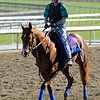 Caption: Snow King<br /> Breeders' Cup morning works at Santa Anita near Arcadia, California, on Oct. 29, 2012.<br /> BCRACES2012 WorksMonday1 image671<br /> Photo by Anne M. Eberhardt