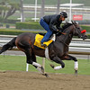 Caption: Richard's Kid<br /> Breeders' Cup morning works at Santa Anita near Arcadia, California, on Oct. 31, 2012.<br /> BCRACES2012 WorksThurs2 image152<br /> Photo by Anne M. Eberhardt