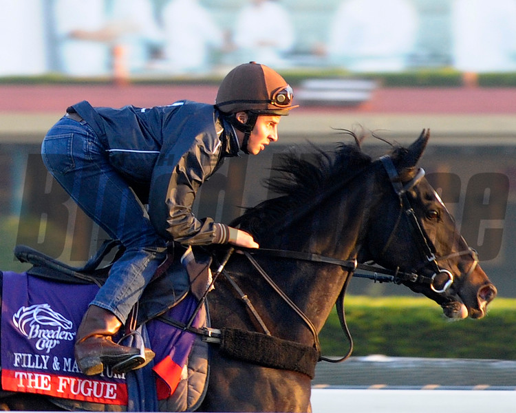 Caption: The Fugue<br /> Breeders' Cup morning works at Santa Anita near Arcadia, California, on Oct. 31, 2012.<br /> BCRACES2012 WorksWed2 image462<br /> Photo by Anne M. Eberhardt