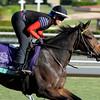 Caption: Sweet Shirley Mae<br /> Breeders' Cup morning works at Santa Anita near Arcadia, California, on Oct. 29, 2012.<br /> BCRACES2012 WorksMonday1 image553<br /> Photo by Anne M. Eberhardt