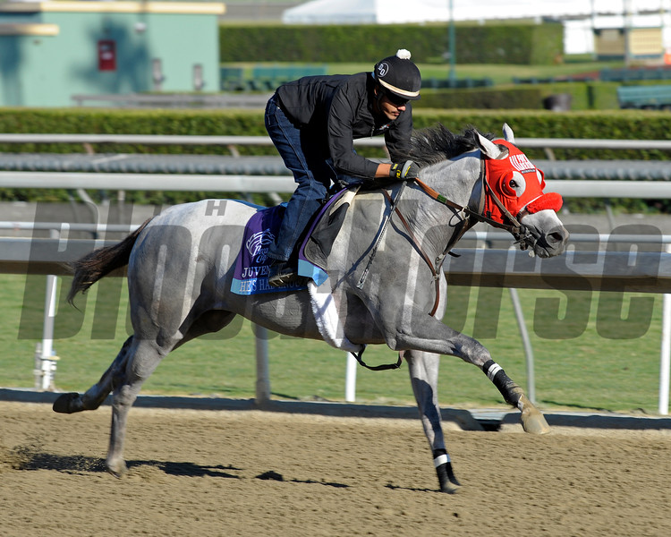 Caption: He's Had Enough<br /> Breeders' Cup morning works at Santa Anita near Arcadia, California, on Oct. 29, 2012.<br /> BCRACES2012 WorksMonday1 image572<br /> Photo by Anne M. Eberhardt