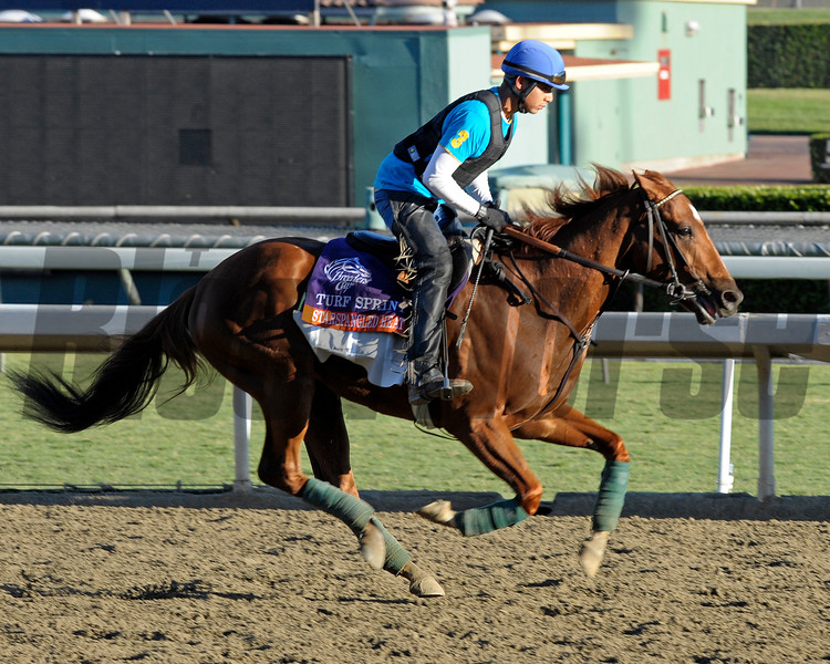 Caption: Starspangled Heat, Turf Sprint<br /> Breeders' Cup morning works at Santa Anita near Arcadia, California, on Oct. 28, 2012.<br /> BCRACES2012 WorksSunday2 image871<br /> Photo by Anne M. Eberhardt