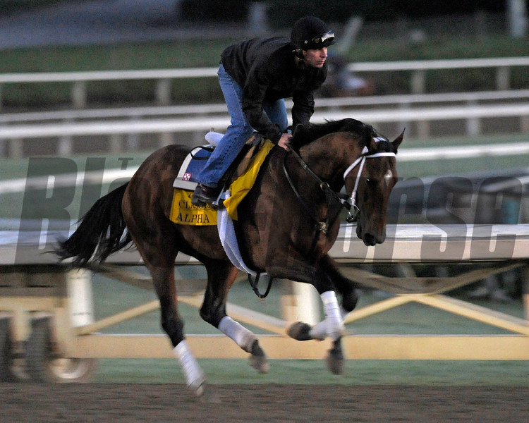 Caption: Alpha<br /> Breeders' Cup morning works at Santa Anita near Arcadia, California, on Oct. 29, 2012.<br /> BCRACES2012 WorksMonday1 image024<br /> Photo by Anne M. Eberhardt