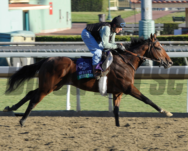 Caption: Boxeur des<br /> Breeders' Cup morning works at Santa Anita near Arcadia, California, on Oct. 28, 2012.<br /> BCRACES2012 WorksSunday2 image877<br /> Photo by Anne M. Eberhardt