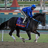 Caption: Great Mills, Turf Sprint<br /> Breeders' Cup morning works at Santa Anita near Arcadia, California, on Oct. 28, 2012.<br /> BCRACES2012 WorksSunday2 image522<br /> Photo by Anne M. Eberhardt