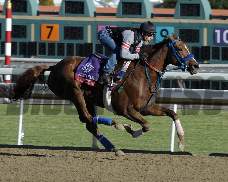 Caption: Almudena<br /> Breeders' Cup morning works at Santa Anita near Arcadia, California, on Oct. 28, 2012.<br /> BCRACES2012 WorksSunday2 image859<br /> Photo by Anne M. Eberhardt