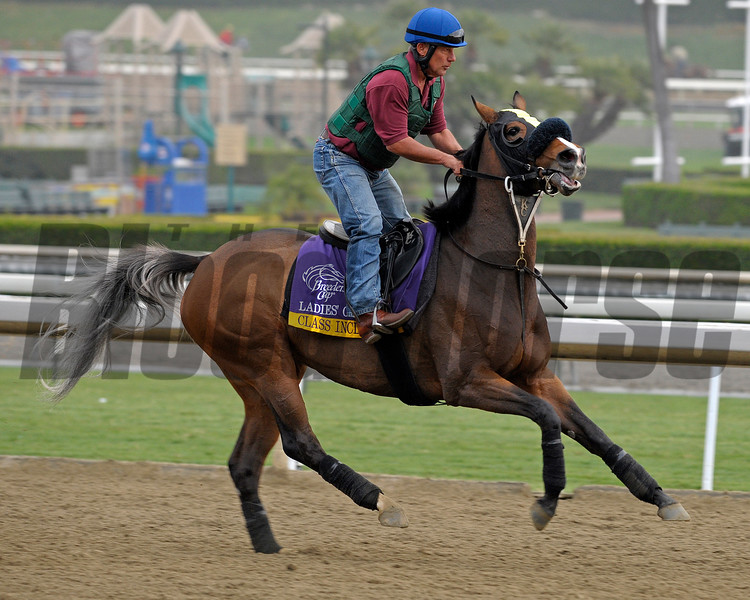 Caption: Class Included<br /> Breeders' Cup morning works at Santa Anita near Arcadia, California, on Oct. 31, 2012.<br /> BCRACES2012 WorksThurs2 image159<br /> Photo by Anne M. Eberhardt