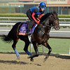 Caption: Global Power<br /> Breeders' Cup morning works at Santa Anita near Arcadia, California, on Oct. 31, 2012.<br /> BCRACES2012 WorksWed2 image808<br /> Photo by Anne M. Eberhardt