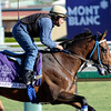 Caption: Suggestive Boy, Mile<br /> Breeders' Cup morning works at Santa Anita near Arcadia, California, on Oct. 29, 2012.<br /> BCRACES2012 WorksMonday1 image602<br /> Photo by Anne M. Eberhardt