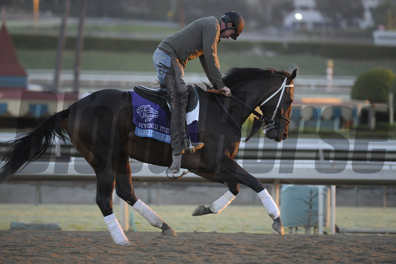 Caption: Gabriel Charles<br /> Breeders' Cup morning works at Santa Anita near Arcadia, California, on Oct. 29, 2012.<br /> BCRACES2012 WorksMonday1 image116<br /> Photo by Anne M. Eberhardt