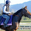 Caption: Flotilla<br /> Breeders' Cup morning works at Santa Anita near Arcadia, California, on Oct. 30, 2012.<br /> BCRACES2012 WorksTues2 image170<br /> Photo by Anne M. Eberhardt