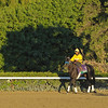 Caption: Great Hot<br /> Breeders' Cup morning works at Santa Anita near Arcadia, California, on Oct. 30, 2012.<br /> BCRACES2012 WorksTues3 image919<br /> Photo by Anne M. Eberhardt