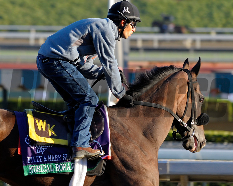 Caption: Musical Romance<br /> Breeders' Cup morning works at Santa Anita near Arcadia, California, on Oct. 29, 2012.<br /> BCRACES2012 WorksMonday1 image335<br /> Photo by Anne M. Eberhardt
