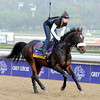 Grace Hall <br /> Breeders' Cup 2012<br /> Photo by Dave Harmon