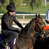 Caption: Cogito, Turf<br /> Breeders' Cup morning works at Santa Anita near Arcadia, California, on Oct. 29, 2012.<br /> BCRACES2012 WorksMonday1 image232<br /> Photo by Anne M. Eberhardt