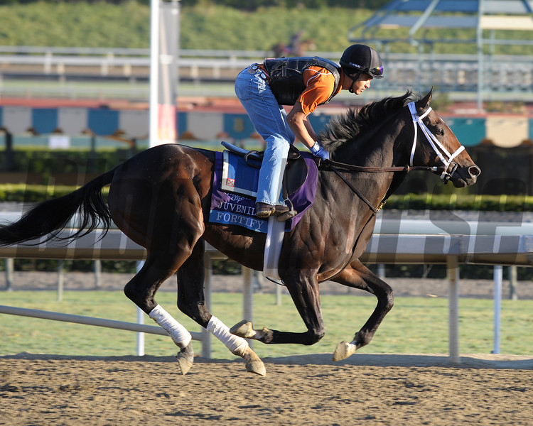 Caption: Fortify<br /> Breeders' Cup morning works at Santa Anita near Arcadia, California, on Oct. 29, 2012.<br /> BCRACES2012 WorksMonday1 image377<br /> Photo by Anne M. Eberhardt