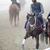 Spring in the Air 2012 Breeders Cup, Santa Anita, Arcadia, Ca 10/31/12, Photo by Mathea Kelley