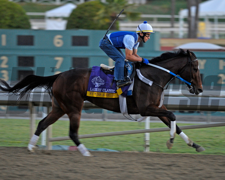 Caption: My Miss Aurelia<br /> Breeders' Cup morning works at Santa Anita near Arcadia, California, on Oct. 28, 2012.<br /> BCRACES2012 WorksSunday2 image530<br /> Photo by Anne M. Eberhardt
