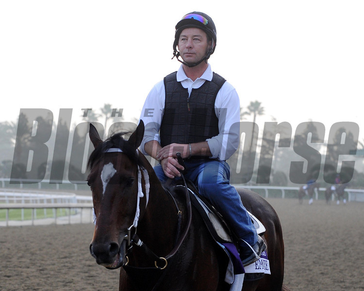 Emcee<br /> Breeders' Cup 2012<br /> Photo by Dave Harmon