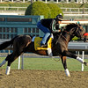 Caption: Richard's Kid, Classic<br /> Breeders' Cup morning works at Santa Anita near Arcadia, California, on Oct. 30, 2012.<br /> BCRACES2012 WorksTues2 image<br /> Photo by Anne M. Eberhardt