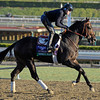 Caption: Merit Man<br /> Breeders' Cup morning works at Santa Anita near Arcadia, California, on Oct. 29, 2012.<br /> BCRACES2012 WorksMonday1 image305<br /> Photo by Anne M. Eberhardt