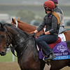 Caption: Lines of Battle<br /> Breeders' Cup morning works at Santa Anita near Arcadia, California, on Oct. 31, 2012.<br /> BCRACES2012 WorksThurs2 image957<br /> Photo by Anne M. Eberhardt