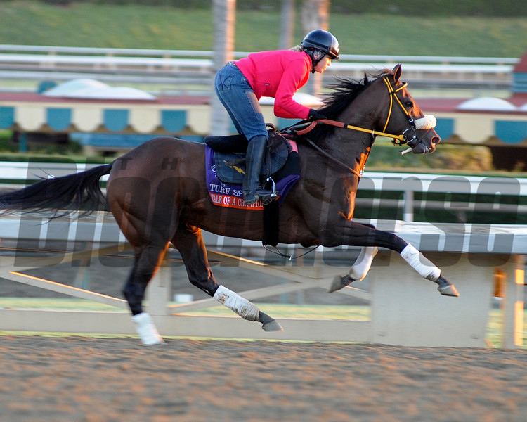 Caption: Tale of a Champion<br /> Breeders' Cup morning works at Santa Anita near Arcadia, California, on Oct. 30, 2012.<br /> BCRACES2012 WorksTues3 image<br /> Photo by Anne M. Eberhardt