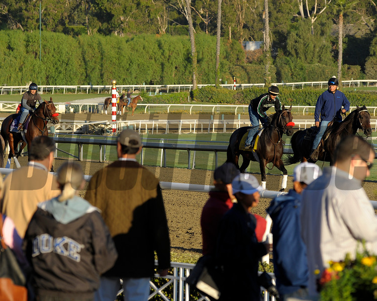 Caption: Richard's Kid on track as fans watch the morning works.<br /> Breeders' Cup morning works at Santa Anita near Arcadia, California, on Oct. 30, 2012.<br /> BCRACES2012 WorksTues3 image979<br /> Photo by Anne M. Eberhardt