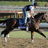 Caption: Emcee<br /> Breeders' Cup morning works at Santa Anita near Arcadia, California, on Oct. 29, 2012.<br /> BCRACES2012 WorksMonday1 image400<br /> Photo by Anne M. Eberhardt