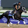 Shanghai Bobby at Santa Anita for the Breeders' Cup.<br /> Photo by Dave W. Harmon