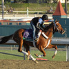 Caption: Hazardous<br /> Breeders' Cup morning works at Santa Anita near Arcadia, California, on Oct. 30, 2012.<br /> BCRACES2012 WorksTues2 image31<br /> Photo by Anne M. Eberhardt
