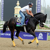 Gantry<br /> Breeders' Cup 2012<br /> Photo by Dave Harmon